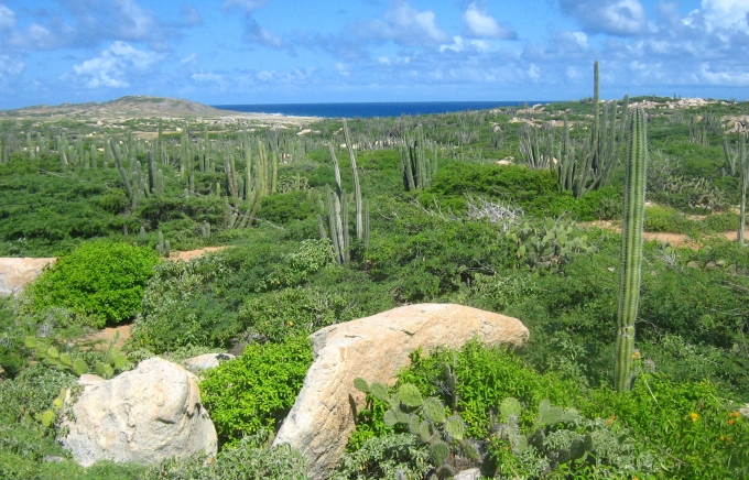 Aruba nature shot of the north coast near Alto Vista